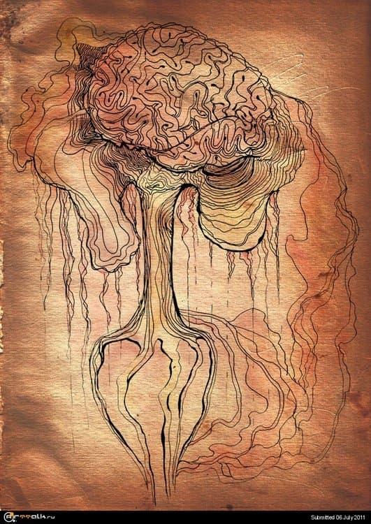 brain.thumb.jpg.00deefe215b6ebcb7642d252df8b0494.jpg