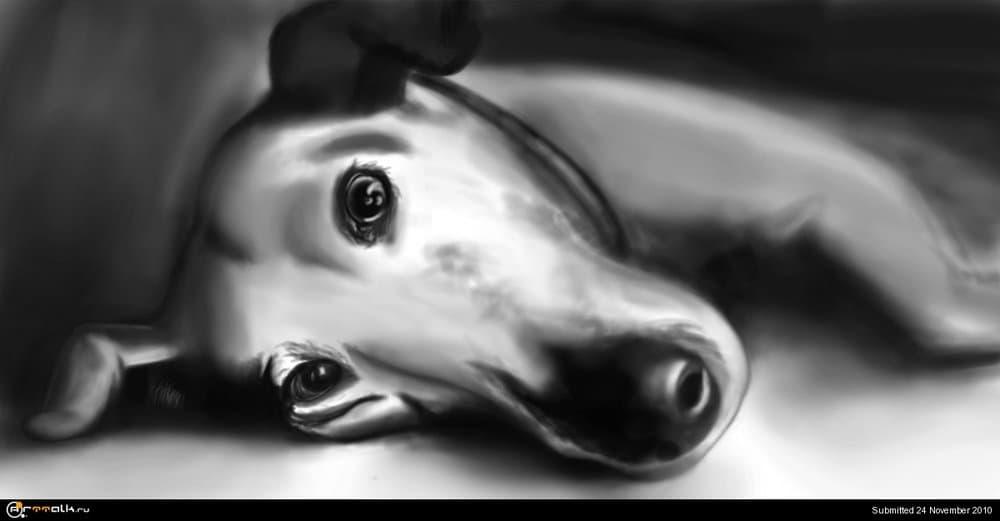 dog.thumb.jpg.51af840a5614c1ed0a0256526a24c1e0.jpg