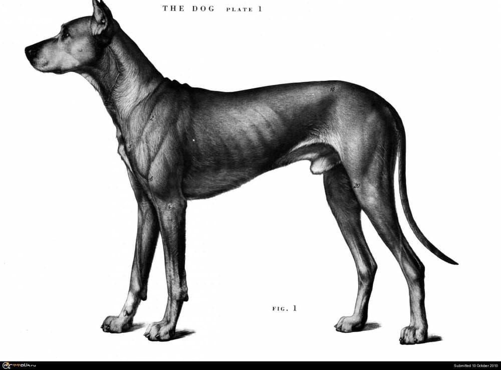 dog001.thumb.jpg.ceb29481dd0467d0b5ca14b95f7b30e9.jpg
