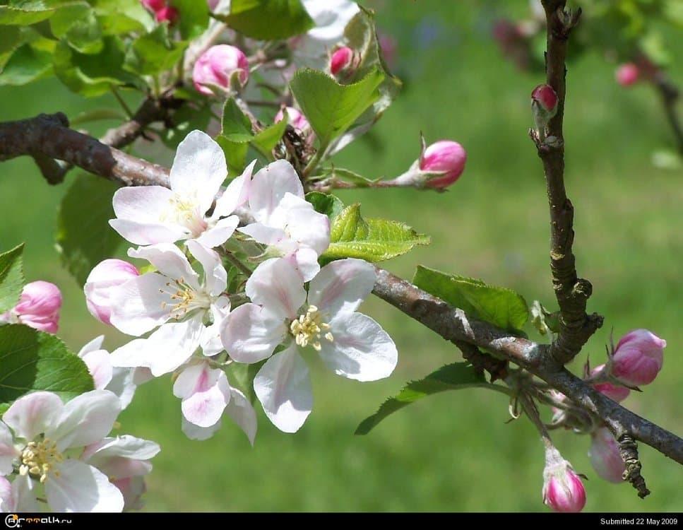 flower_00516.thumb.jpg.fe9c25673551a2a7564f82eff1215943.jpg