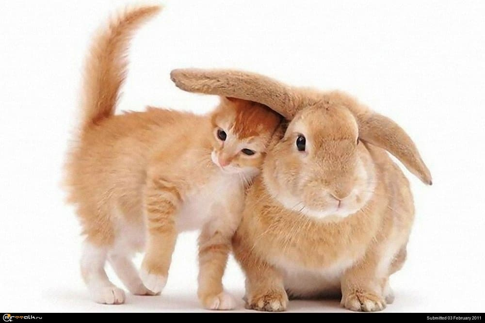 funny-cat-picture-when-cats-buy-impractical-hats.thumb.jpg.1e9cfd785a33da570b1482ed73a23347.jpg