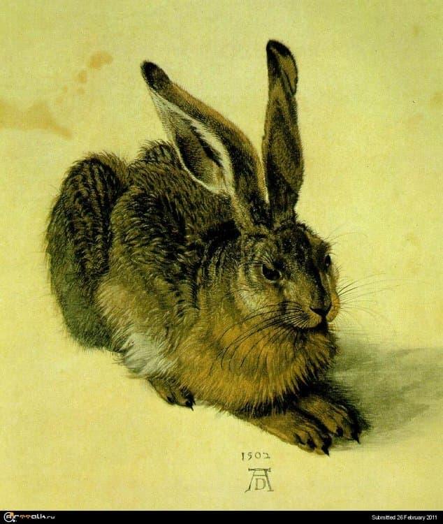 hare.thumb.jpg.ad4444d6e3f8610e69d7d689ee26812f.jpg