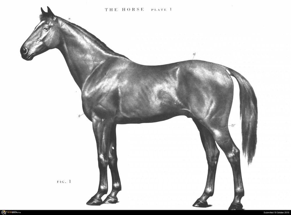 horse001.thumb.jpg.ac5f8aa3ff2cf9849212b47c8ce8c924.jpg