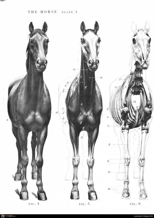 horse004.thumb.jpg.ec569dff4120d055c8f7324615b61f53.jpg