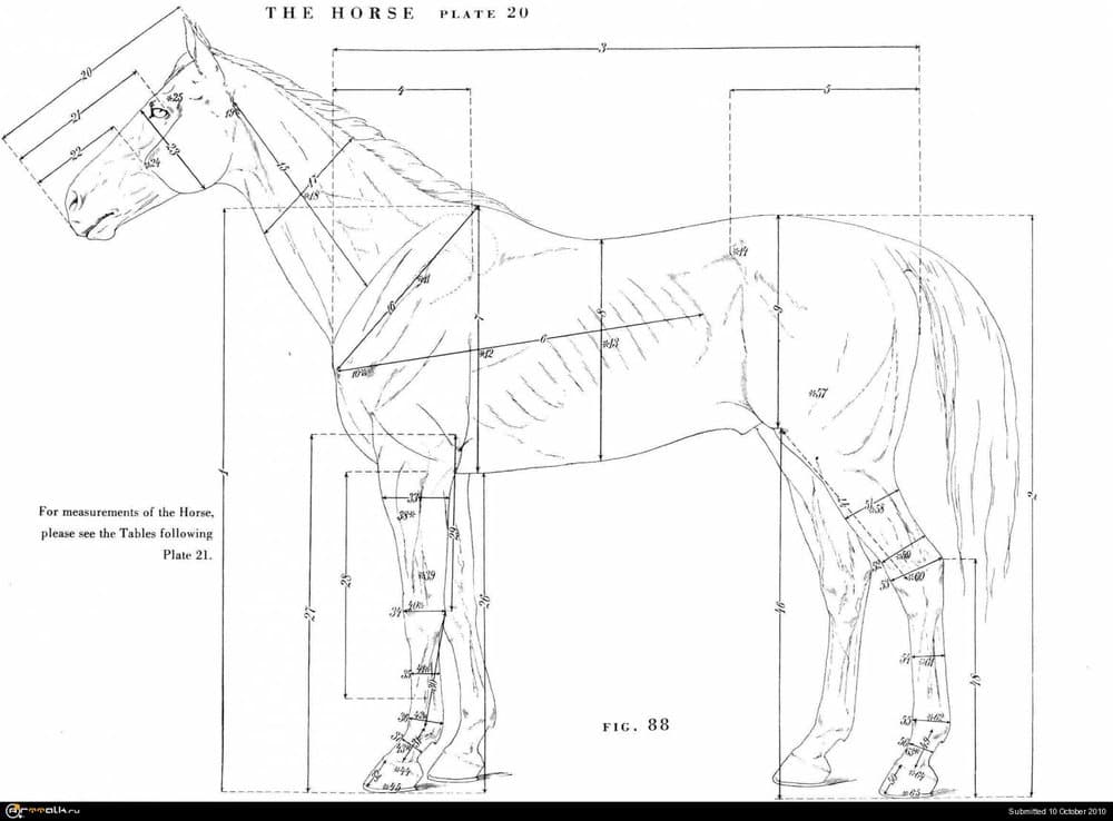 horse018.thumb.jpg.47eb6e9418a8d3a09c89929e7f8f03be.jpg
