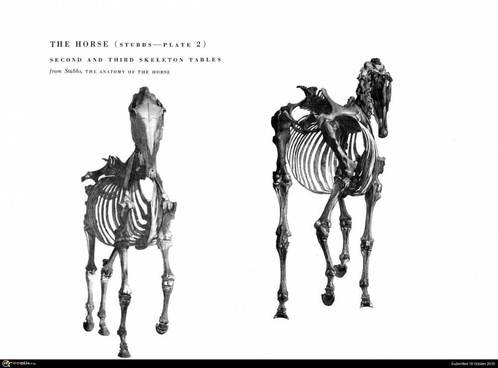 horse020.thumb.jpg.78a664fcc7d847ac2d5726ed6f90eef7.jpg