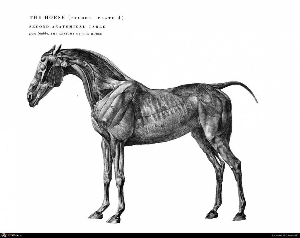 horse022.thumb.jpg.6d1a28eecd473ba2e03718bc215d5269.jpg