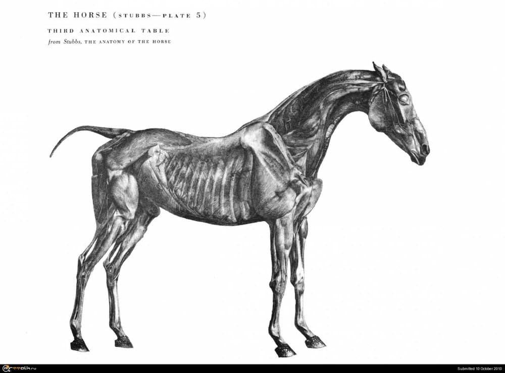 horse023.thumb.jpg.56f08f36dc14eef2c08793dd992838f6.jpg