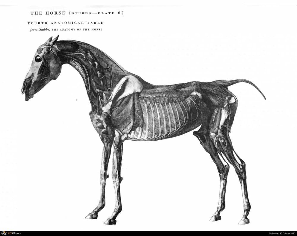 horse024.thumb.jpg.70d286eb9a23b432c8908f66ec9c55c2.jpg
