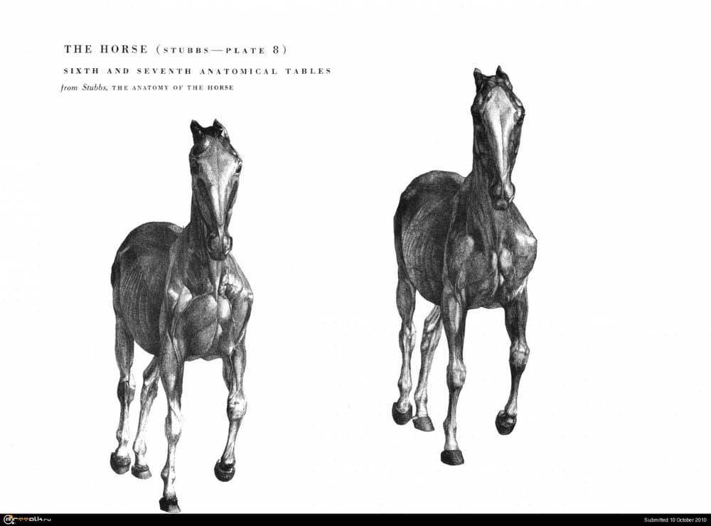 horse025.thumb.jpg.53b969bf3e5cbc48858f2408fc938831.jpg