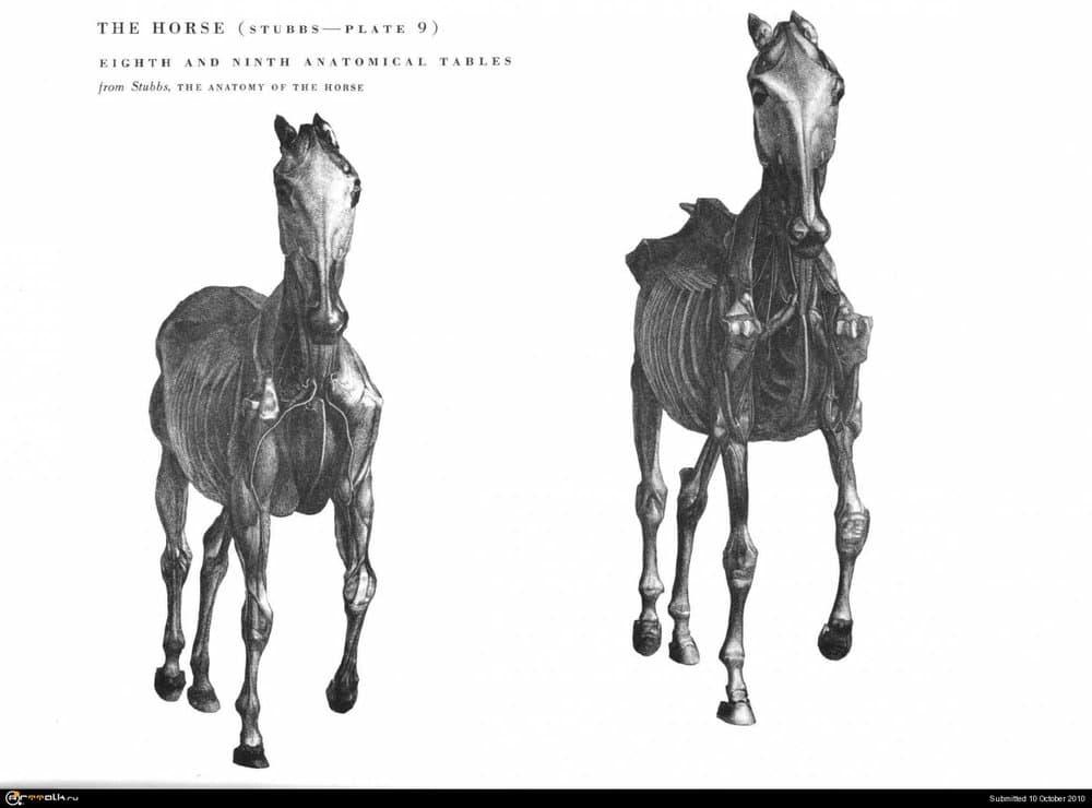 horse026.thumb.jpg.7eed1a30a40be670ac27f0c2f3d7ca97.jpg