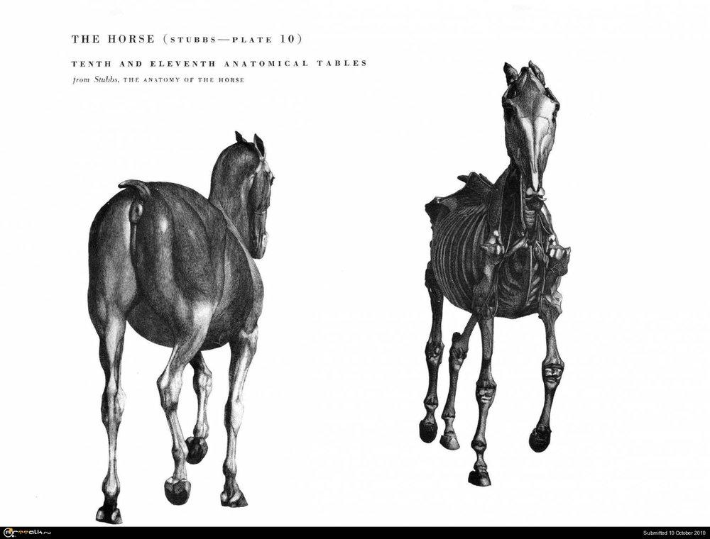 horse027.thumb.jpg.ea73a48cb26268e60ed2f52293f5fe96.jpg