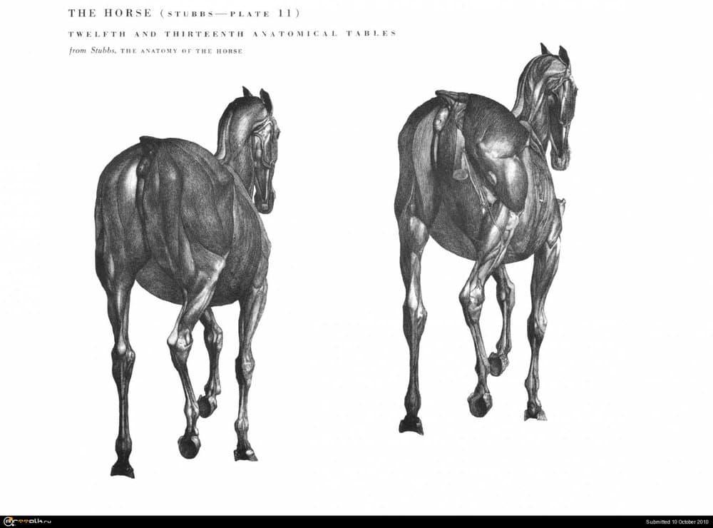 horse028.thumb.jpg.be0fe150382205f47611b6644bf0958b.jpg