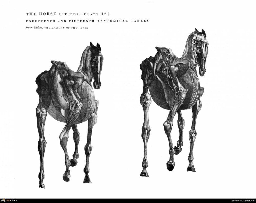 horse029.thumb.jpg.5dddc99ef0cabd7877ecd8e587f329b6.jpg