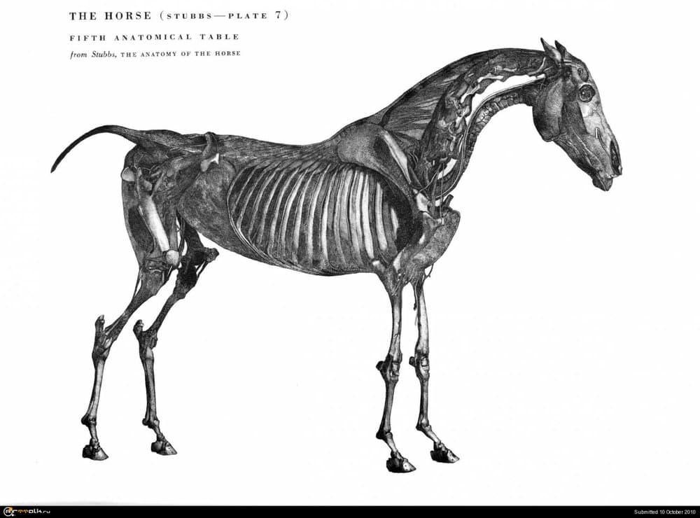 horse030.thumb.jpg.86ccc1746964a5509750493dfac426f7.jpg