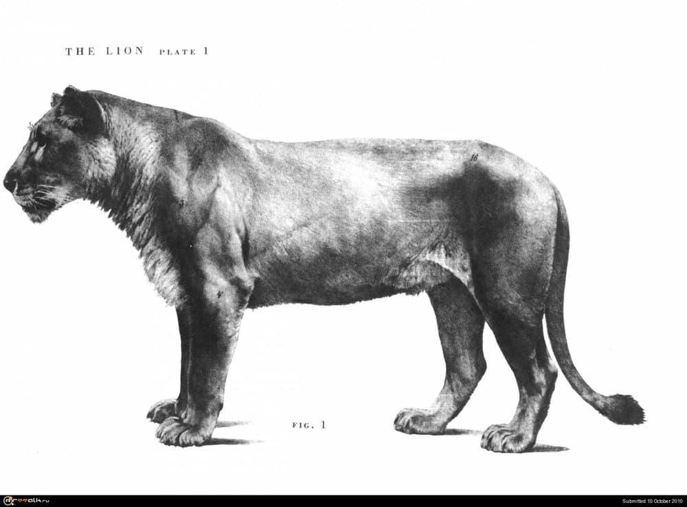 lion001.thumb.jpg.d09aaec8fa3ddc464dec1889a20262e0.jpg