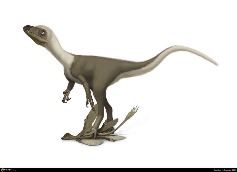 sinocalliopteryx1.thumb.jpg.2d8f74d73635f89c653980b9bb786e77.jpg