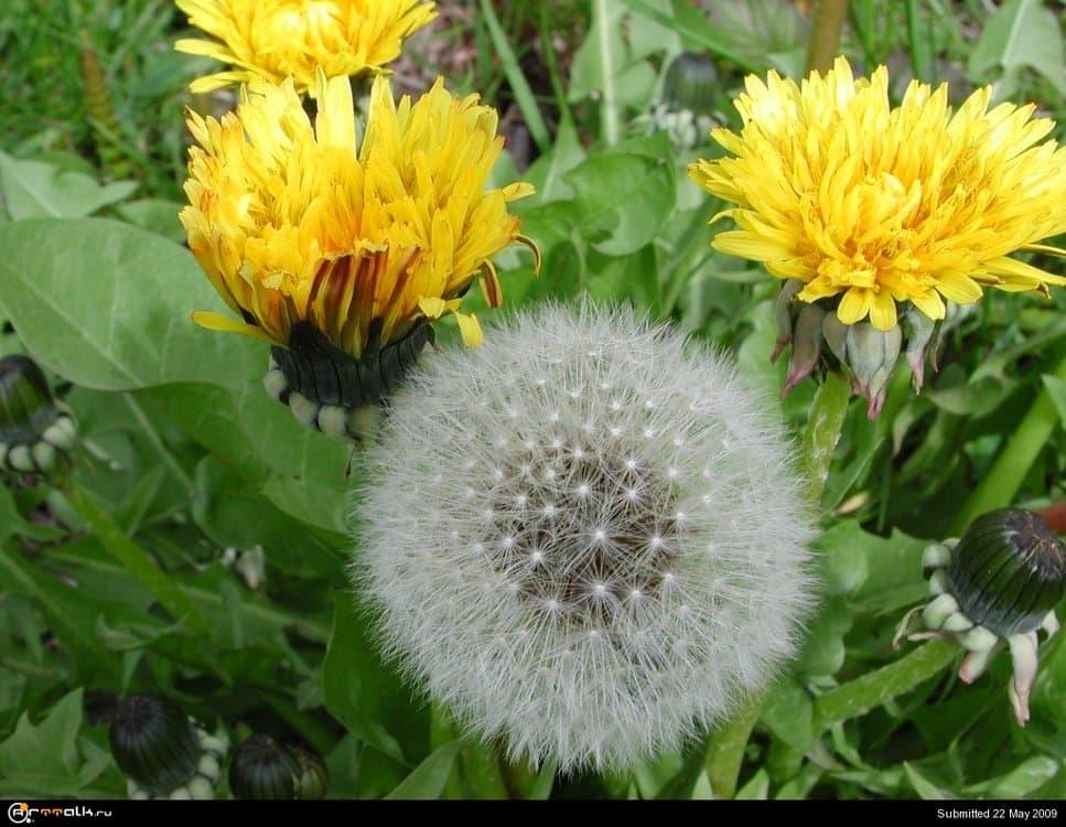 spring_022.thumb.jpg.8412dce0024b9c5dca3e99a58c206f0c.jpg