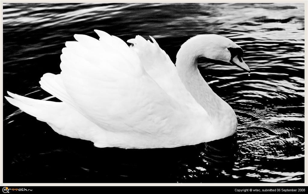 черно-белая грация