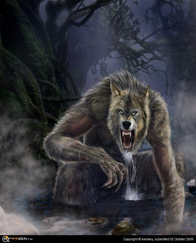 Wolf  In The Forest 02