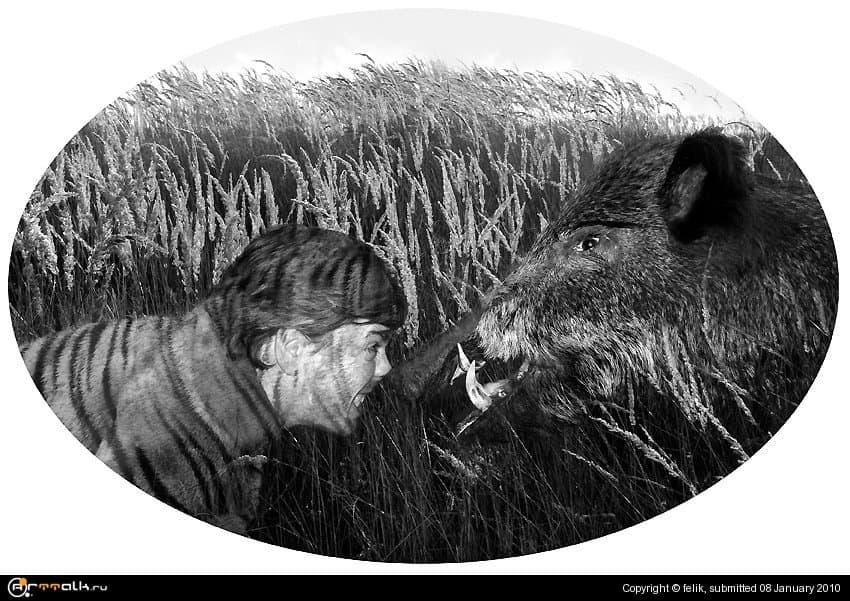 Кабанов в лесу много, а тигр один (притча)