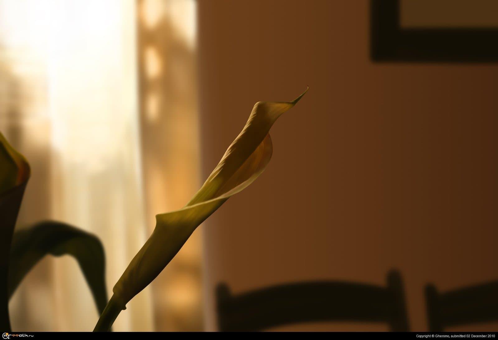 Цветок в тени