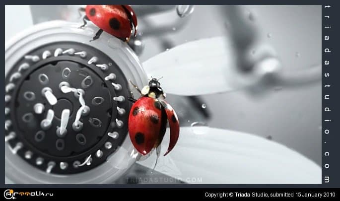 Ideal Ladybugs