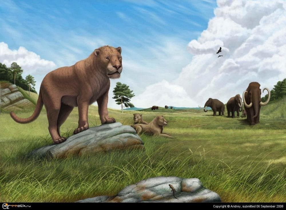 Panthera spelaea (пещерный лев)