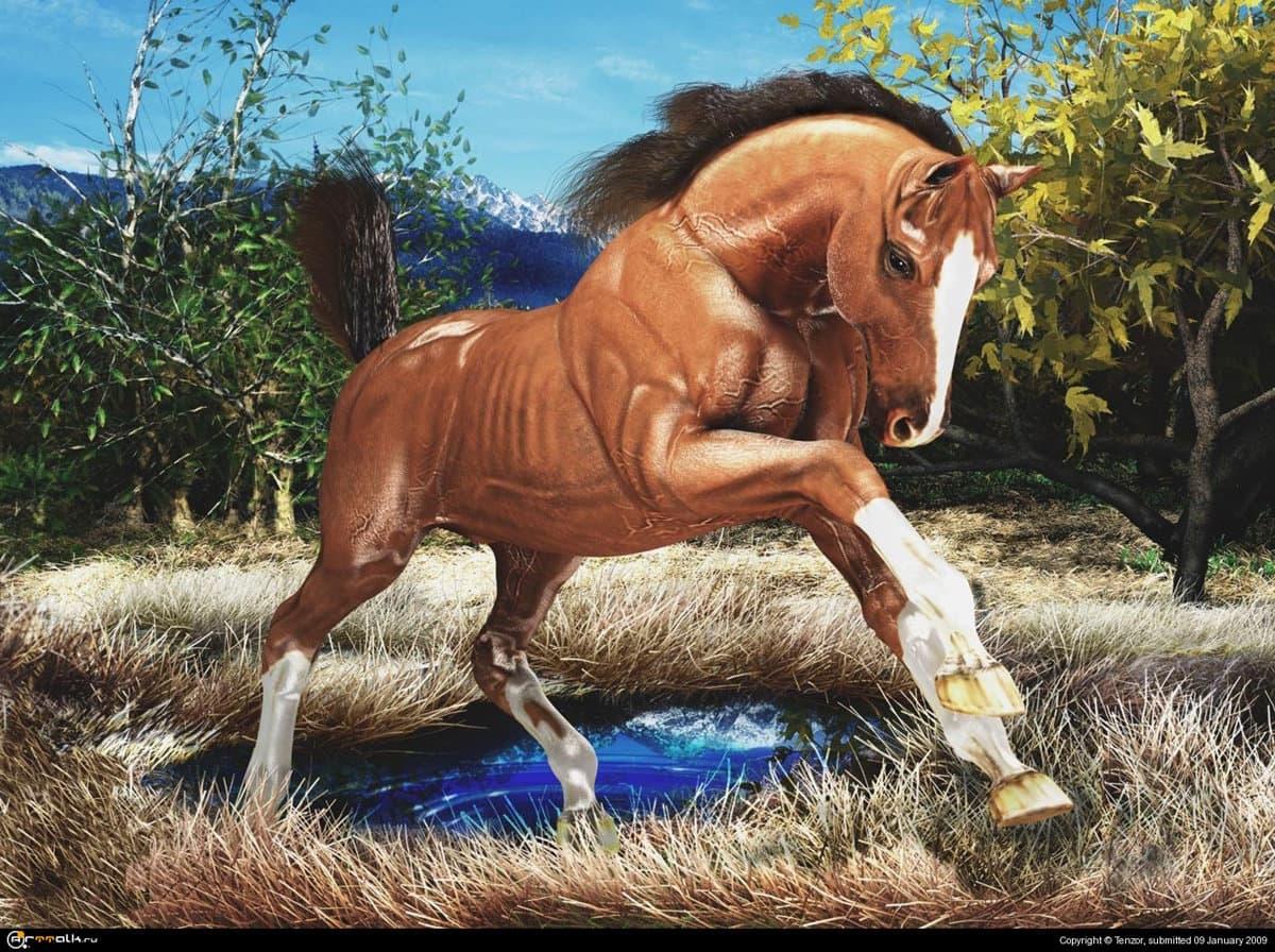 Возвращение коня