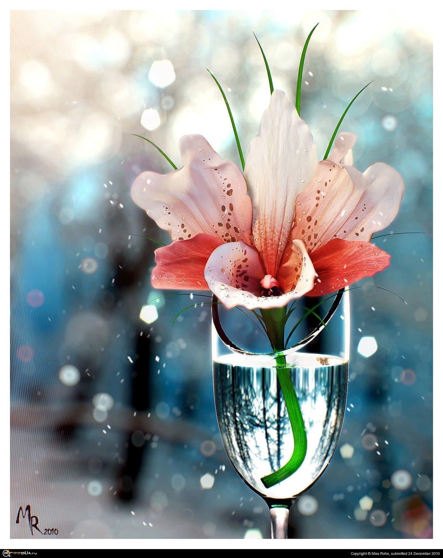 Орхидея...