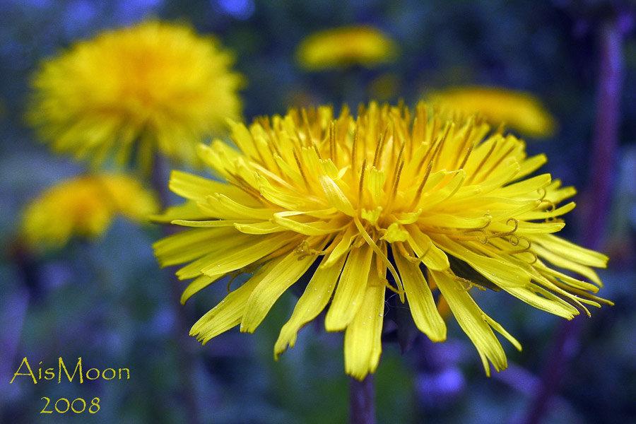 Желтым цветом на голубой поляне…