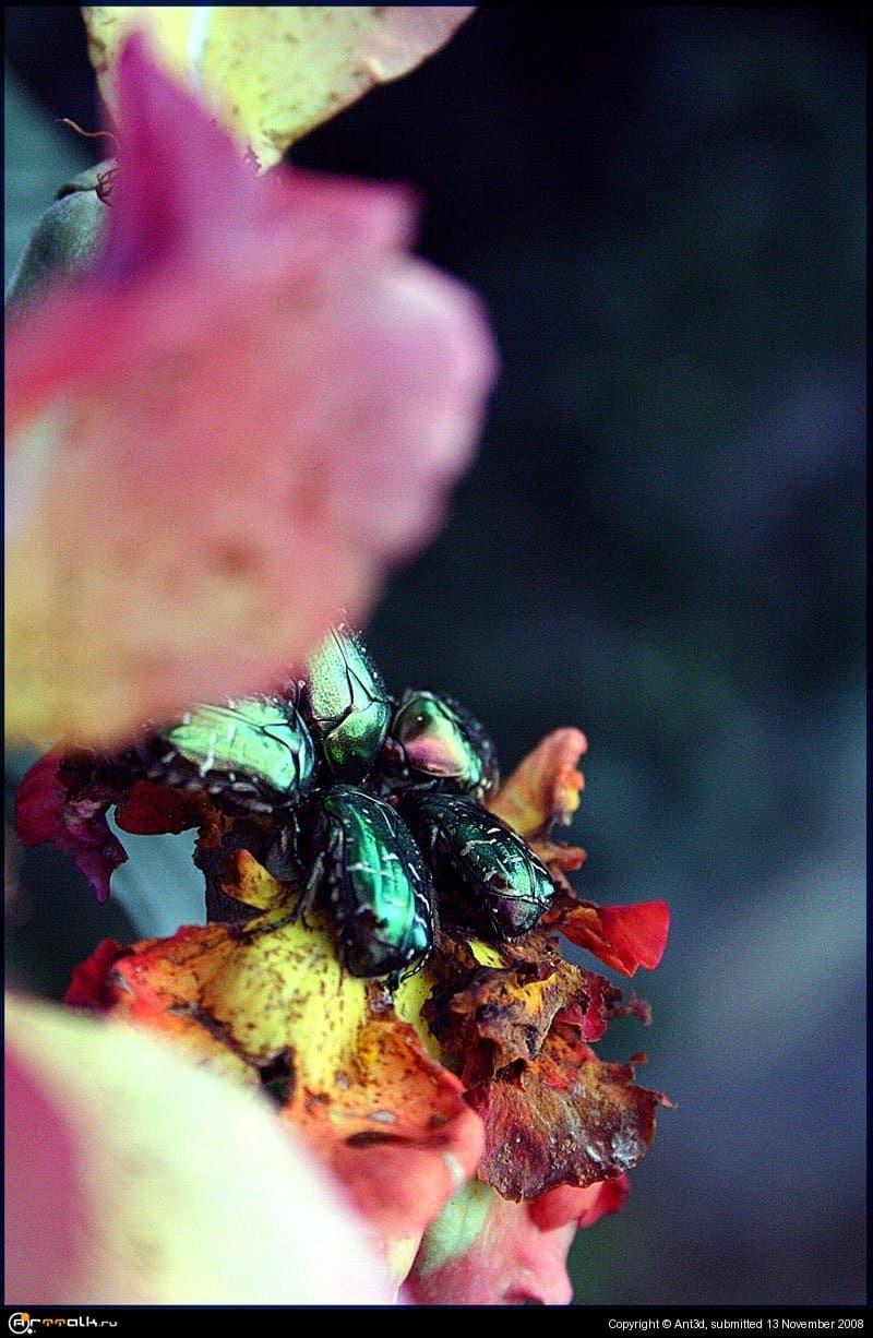Пожератели цветов