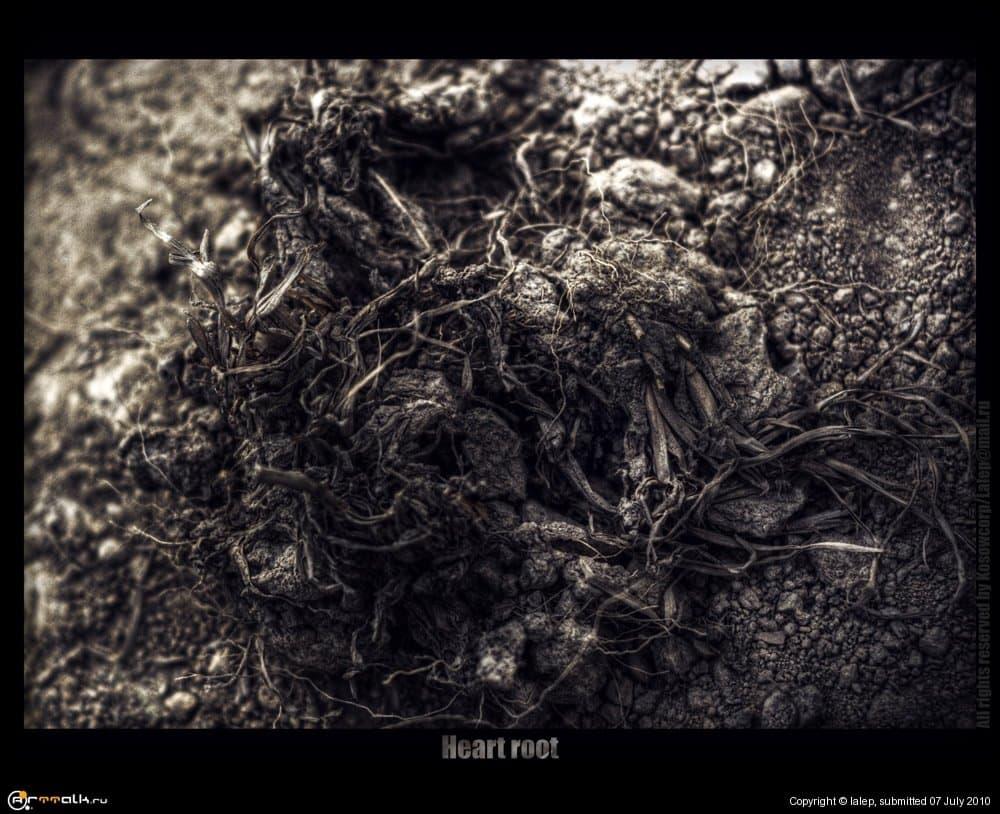 Heart Root...