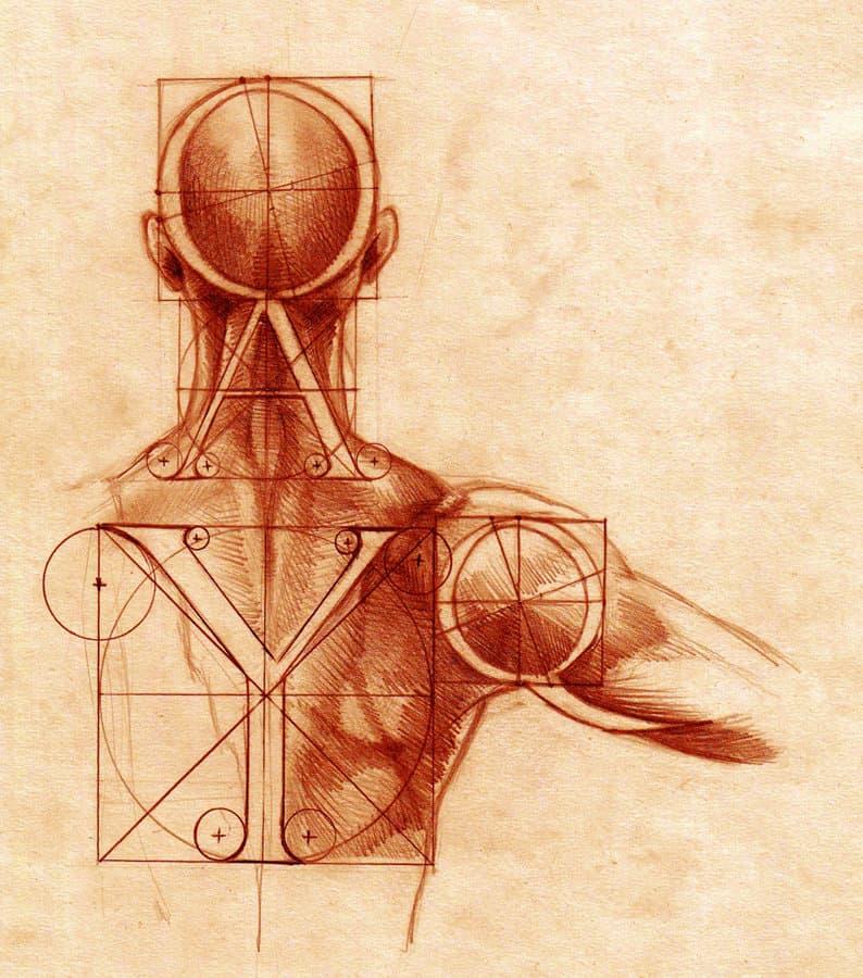 Анатомия и шрифт