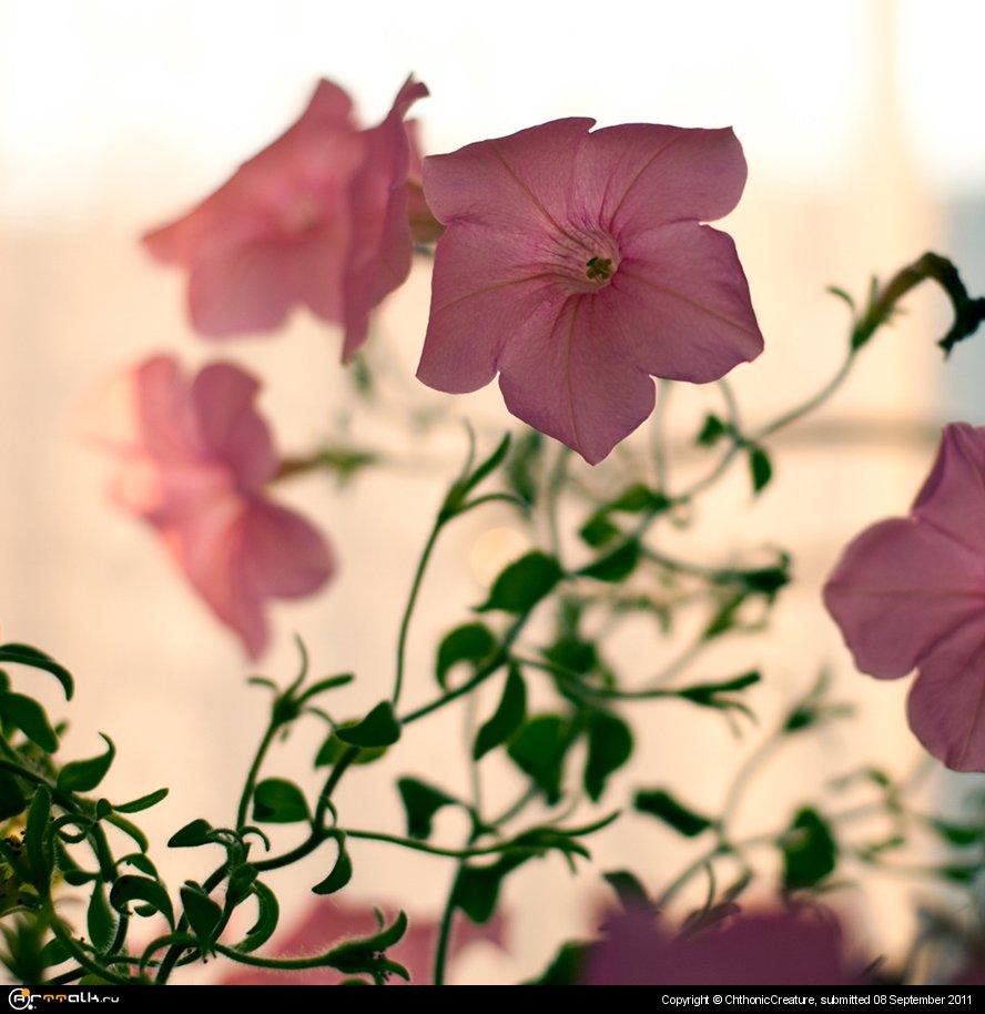 нежная флора