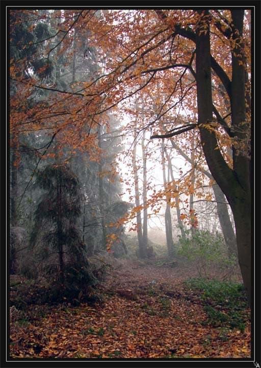 лесной сон