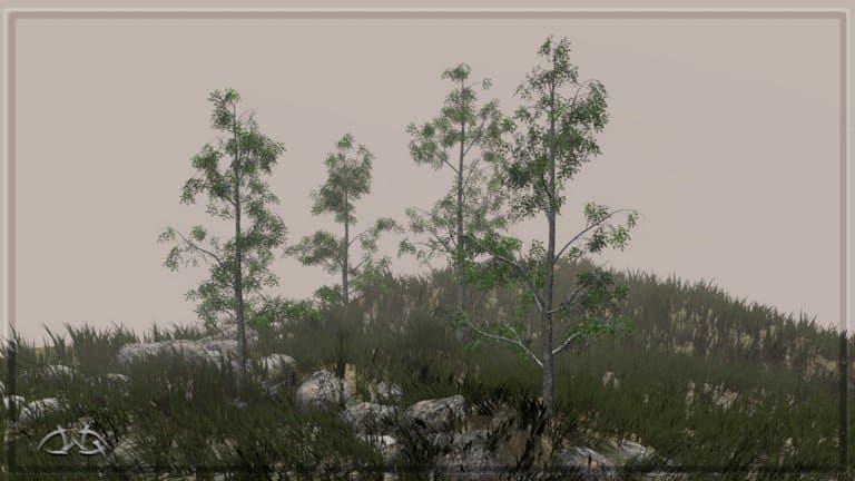 Tree5_Scenes_n8.jpg