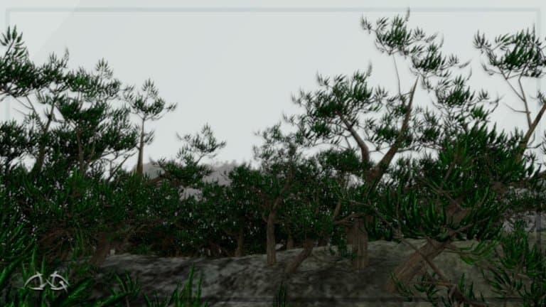 step_nature_n6.jpeg